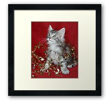 Maine Coon kitten wrapped in tinsel! Framed Print