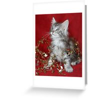 Maine Coon kitten wrapped in tinsel! Greeting Card