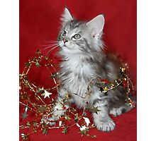 Maine Coon kitten wrapped in tinsel! Photographic Print