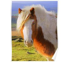 Dartmoor: A Pony with Style Poster
