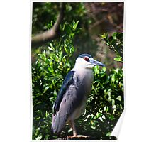 Night Heron Poster