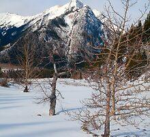 Winter snow by zumi