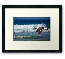 horizontal flying Framed Print