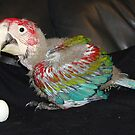 Macaw 7 Weeks by Goldenspirit