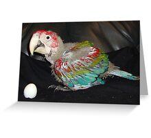 Macaw 7 Weeks Greeting Card