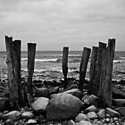 wood on the beach by Ronny Stiffel
