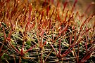 Complexity of Nature - Fishhook Barrel Cactus by Vicki Pelham