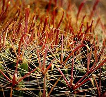Complexity of Nature - Fishhook Barrel Cactus by Vicki Pelham