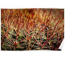 Complexity of Nature - Fishhook Barrel Cactus Poster