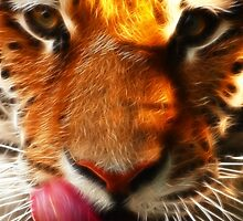 Siberian Tiger by Beverly Lussier