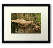The Magestic Bracket Framed Print