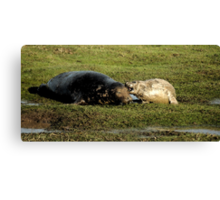 Guess What Mum - Watercolor Grey Seal With Pup Canvas Print
