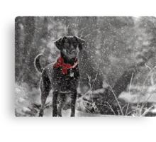 Dashing Through the Snow... Metal Print
