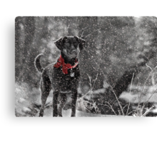 Dashing Through the Snow... Canvas Print