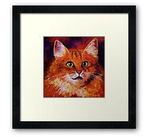 Longhaired Ginger Cat Framed Print