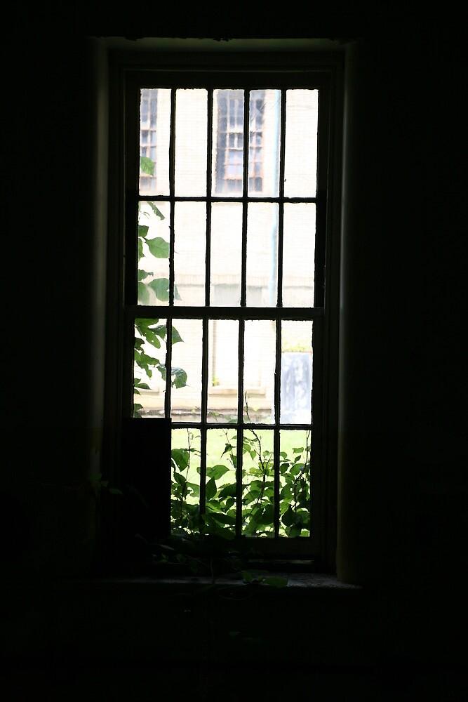 asylum window by jbiller