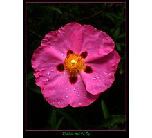 Perfectly Pink and Proud Photographic Print