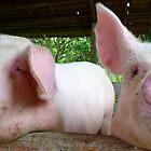 Pigs - Vietnam by biancamarks