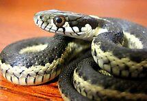 Serpents Stare by SeanTrostrud