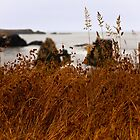 Coastal Grass by Jon Yager