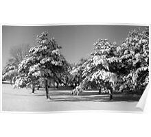 snow.  Poster