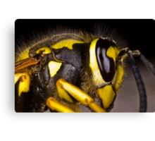 Common wasp close-up Canvas Print