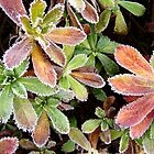 Outlined in Frost  by clizzio
