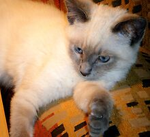 Sushi Blue Eyes by Debbi Tannock