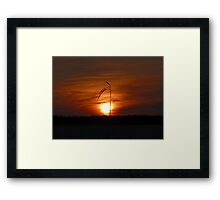 Lone Stalk Framed Print