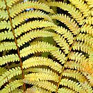 Autumn Fern by Tony Ramos