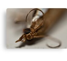 Spider Bait Canvas Print