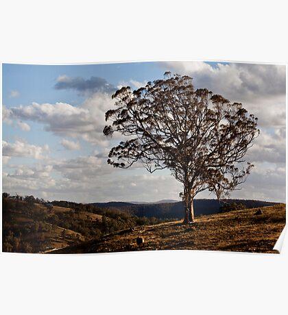 Turon Tree Poster