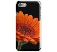 Close-up of head of rain-spattered orange gerbera iPhone Case/Skin