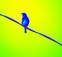 Bluebird on Wire by GeometryOfColor