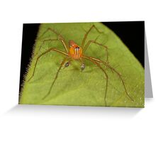 Male Lynx spider Greeting Card
