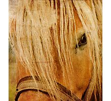 Golden Horse Photographic Print