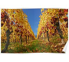 Autumn in the vineyard Poster
