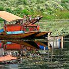 Tranquility of Dal Lake by RajeevKashyap