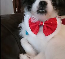 Rosie in her bow tie by beaston