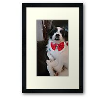 Rosie in her bow tie Framed Print