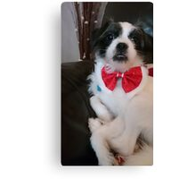 Rosie in her bow tie Canvas Print