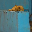 Catnap by Naomi Brooks