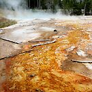 Yellowstone Magic by signaturelaurel