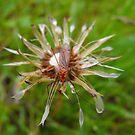 Bug Eyed!! by Tracy Wazny