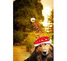 Merry DOG christmas Photographic Print
