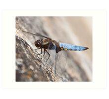 A beautiful wild Dragonfly Art Print