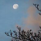 Moon portrait by Themis