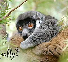 Really? Monkey  by Ron  Hanson