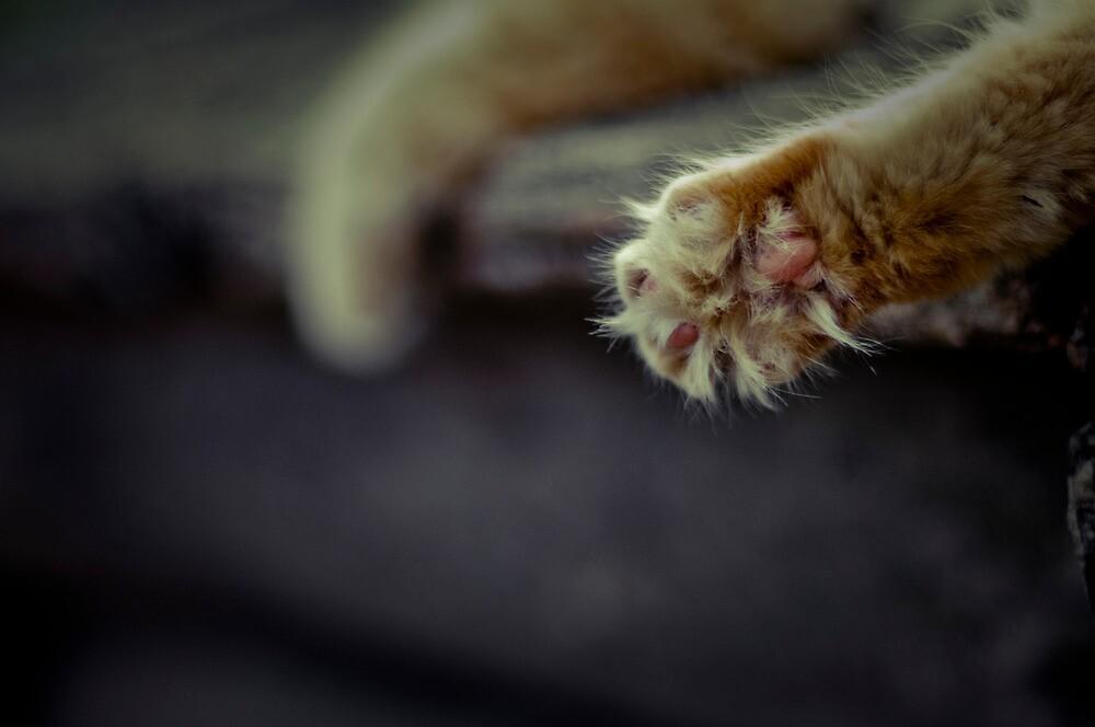 Cat pad by mrKIO