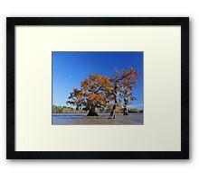 Majestic Cypress Framed Print
